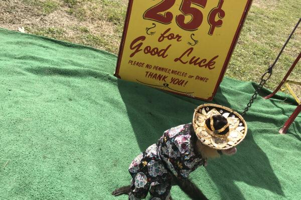 Oglesby-Rattlesnake-Roundup-34