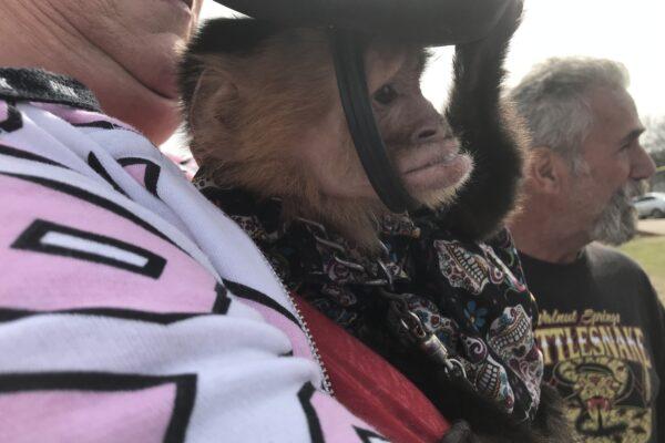 Oglesby-Rattlesnake-Roundup-Monkey